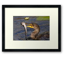 Double-crested Cormorant Fishing Framed Print