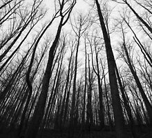 The Forest for the Trees by Greg Booher