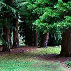Pine glade - Allendale Gardens, Tasmania by clickedbynic