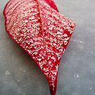 Crystalized Poinsettia Leaf by Noleen  Kavanagh