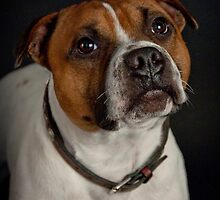 Gizmo (Seenworstaff Stand By Me) by Peter Lawton