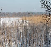 The frozen pond II by Photos - Pauline Wherrell