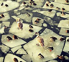 Birds on Ice II by MSaremiPhotos