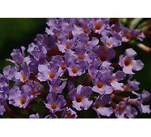 Purple abundance Photographic Print