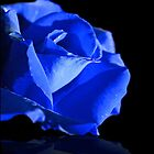 Blue Rose by Vickie Emms