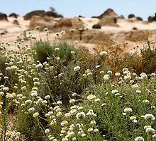 Wildflowers at Mungo by Carole-Anne