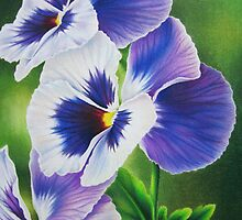 Pansy Faces by lanadi