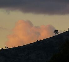 Evening Clouds by JudyDarcy