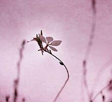 Butterfly Flower 1 by StarFlowerSt