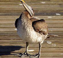 La Lambada Du Pelican by artisandelimage