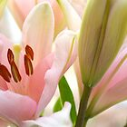 Spring Lily by anchorsofhope