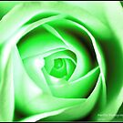 green rose by Greg Parfitt