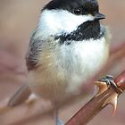 Charming Chickadees by William Brennan