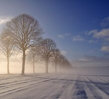 Winter morning tree line by Javimage