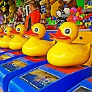 Luv' a Duck - We've got 'em all lined up by TonyCrehan