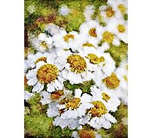 White Daisy's in the summer sun  Photographic Print