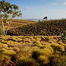 """Millstream Wilderness"" by Heather Thorning"