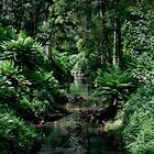 Gellibrand River by Mik Efford