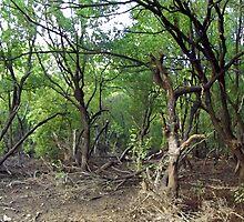 Spooky Trees by Brinjen