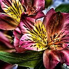 Alstroemeria Peruvian Lily flowers by Vicki Field