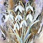 Snowdrops and bark by Jacki Stokes