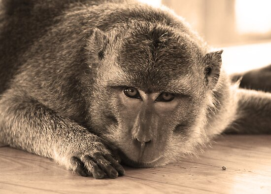 monkey staring at cam-sepia by Michael Brewer