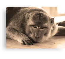 monkey staring at cam-sepia Canvas Print