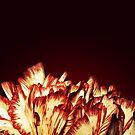 Carnation Flower Fire by Vicki Field