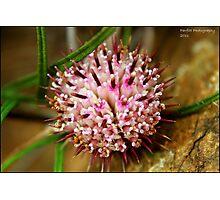 pink seeds Photographic Print