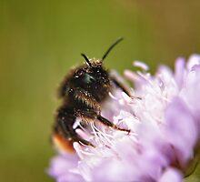 Pollen Covered Bee macro by Vicki Field