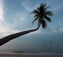 Coconut tree by THHoang