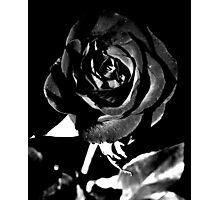 Fleur Noir Et Blanc Photographic Print