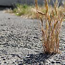 Cracked Grass by LadyEloise