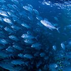 School of Bigeye Trevally, Sipadan, Malaysia by Erik Schlogl