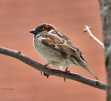 Perched n' Pretty by Heather King