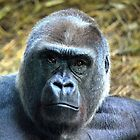 Gorilla deep in thought by sketchpoet