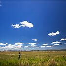 Wide Open Spaces by Chris Cohen