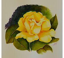 Yellow Rose                        103 Photographic Print