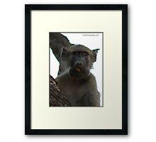 Baboon ! Framed Print