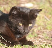Stray Black Kitty by SusieG