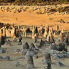Pinnacle Wander - Pinnacles Western Australia by Phil Woodman