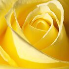 Yellow Rose iPhone by Ross Campbell