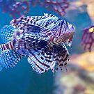 Melbourne Aquarium Star by ea-photos