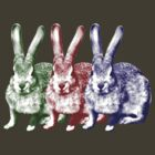 Colorfull Bunnies by oded sonsino