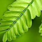 patterns of green by lensbaby