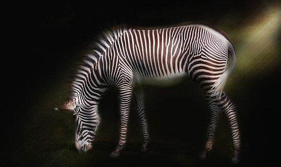 Grevys Zebra  by Elaine  Manley