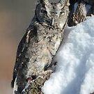 owl by cherylc1