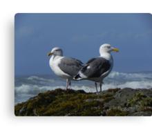 Sea Gulls Canvas Print