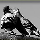 Two doves on the roof by flashcompact