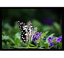 """""""Just living is not enough,"""" said the butterfly, """"one must have sunshine, freedom and a little flower.""""  Photographic Print"""